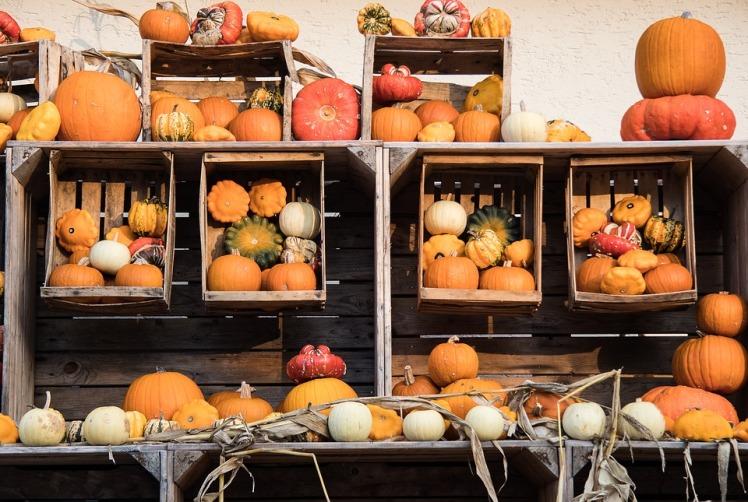 pumpkin-2894480_960_720